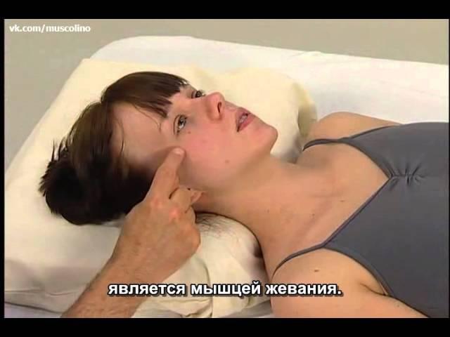 Пальпация мышц головы