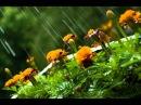 Вахид Аюбов - Дождь