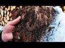 В белорусские леса пришел жук-короед чем он опасен и как бороться с вредителем