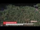 На Дніпропетровщині поліція знайшла величезну плантацію конопель