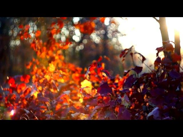 Piece of autumn peace
