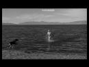 """С собакой на пляже - Мэрилин Монро (Marilyn Monroe) в фильме """"Неприкаянные"""" (The Misfits, 1961, Джон Хьюстон) 1080p"""