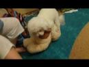 собака насилует мишку :D
