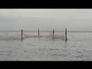 В Алупке в рыболовецких сетях гибнут дельфины