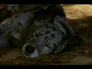 Т/С Собака по имени Снобз 23 серия (2003г)