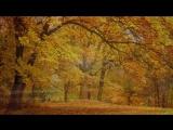 Relaxing Celtic Music- Fantasy Music, Flute Music, Harp Music, Beautiful Music, Relaxing Music -91