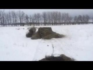 зубр-зима-gif-солома-2938017