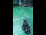 Ижевский зоопарк 2