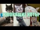 СМЕШНЫЕ ГОВОРЯЩИЕ КОТЫ И КОШКИ / ЭТИ ВИДЕО ОБЛЕТЕЛИ ВЕСЬ ИНТЕРНЕТ/ ПОДБОРКА 1 /Talking cats funny