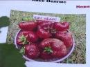 Новые сорта супер-крупноплодной садовой земляники. Выход передачи: 4.08.16