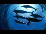 4 часа! Подводное пение китов и дельфинов, для релаксации, сна и снятия стресса singing of whales