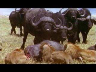 BBC - Unnatural Histories 1of3 Serengeti - ArabHD.net