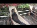 Морские львы заняли шезлонги чтобы отдохнуть и пообниматься