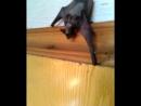 Поймали летучую мышь
