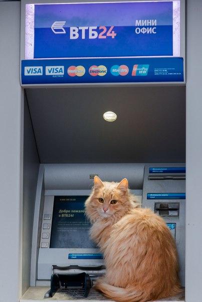Коты г. Камышин выбирают ВТБ 24