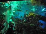 с Анжеленоком на легендарном Sharks Feeding show в Океанариуме Санкт-Петербурга