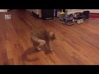 Слепой котик играется