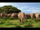 Мир животных Африки. Дикая природа. Удивительные слоны. Документальный фильм.