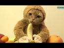 Lustige Katzen Tiere Zum Totlachen 34 BM