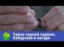 Тайна черной гадюки - Хабургаев в натуре | Живая Планета