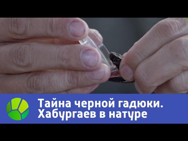 Тайна черной гадюки - Хабургаев в натуре. Сезон 2 | Живая Планета