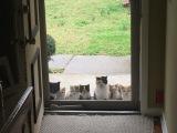 11 человек, у которых нет кошки, но она вдруг появилась в их доме