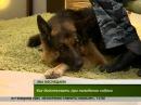 Интервью.Как защититься от бродячих собак pfobnbnmcz jn ,hjlzxb[ cj,fr