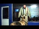Уроки самообороны Как защититься от нападения собаки ehjrb cfvjj jhjys rfr pfobnbnmcz jn yfgfltybz cj frb