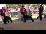 Собачьи волнения - Easter Show 2017