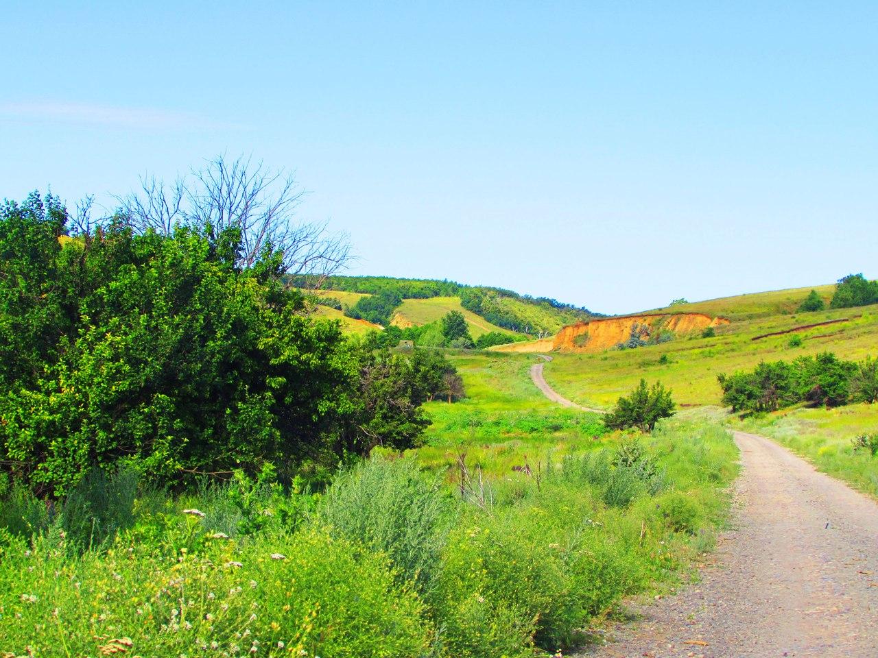 Дорога к пруду