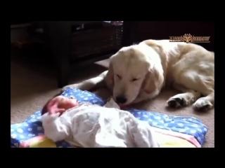 Интересное видео про котов и собак защищающих маленьких детей