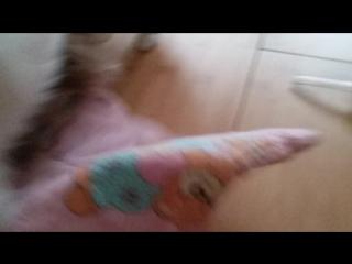 Собачий бокс и Мои собаки