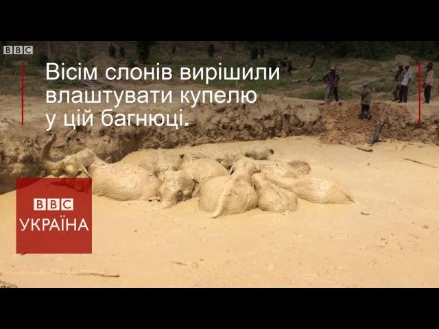Стадо слонів врятувалось з багнюки у ямі