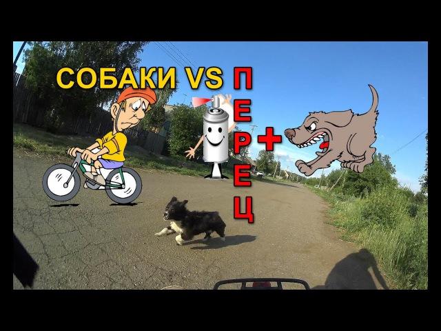 Перцовый баллончик против Собак, Перец, г.Омск. Город глазами велосипедиста 52