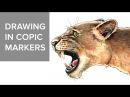 Copic markers speed drawing 3 / Рисую маркерами Copic голову льва
