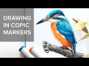 Copic markers speed drawing 1 / Рисую маркерами Copic зимородка