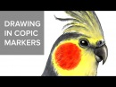 Copic markers speed drawing 6 / Рисую маркерами Copic попугая