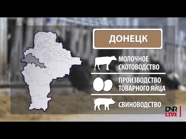 Республика в цифрах: животноводство в ДНР (DNR LIVE production)
