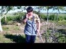 Удаление сорняков с помощью петли Фокина