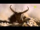 Viasat Nature: Мир насекомых и пауков (1 серия) / Insects: Little Matters / 2013 /