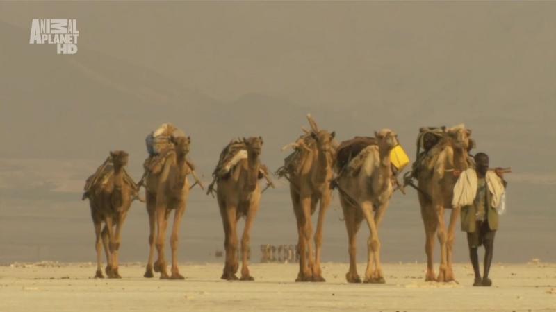 АР. В дебрях Африки. Эфиопия. Земля контрастов. 2002