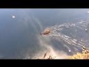 озеро в санатории карагайский бор водяная крыса