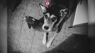 Фотограф сняла последние месяцы жизни любимой собаки