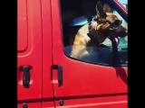 Пес в солнечных очках ездит по Краснодару.
