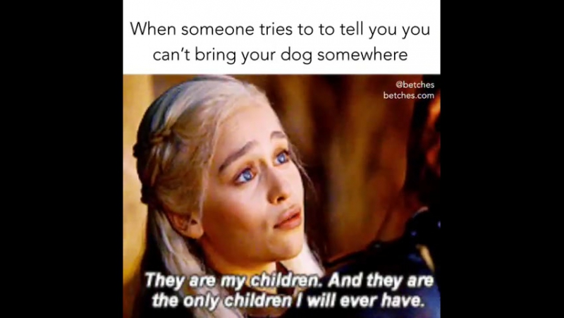 When someone tries to tell you, you can't bring your dog somewhere!