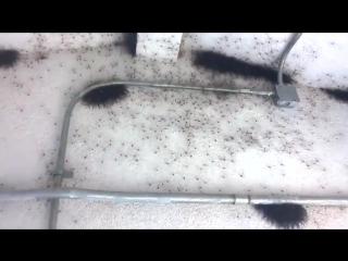 Полная комната пауков