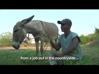 Секс узбеков с ослами