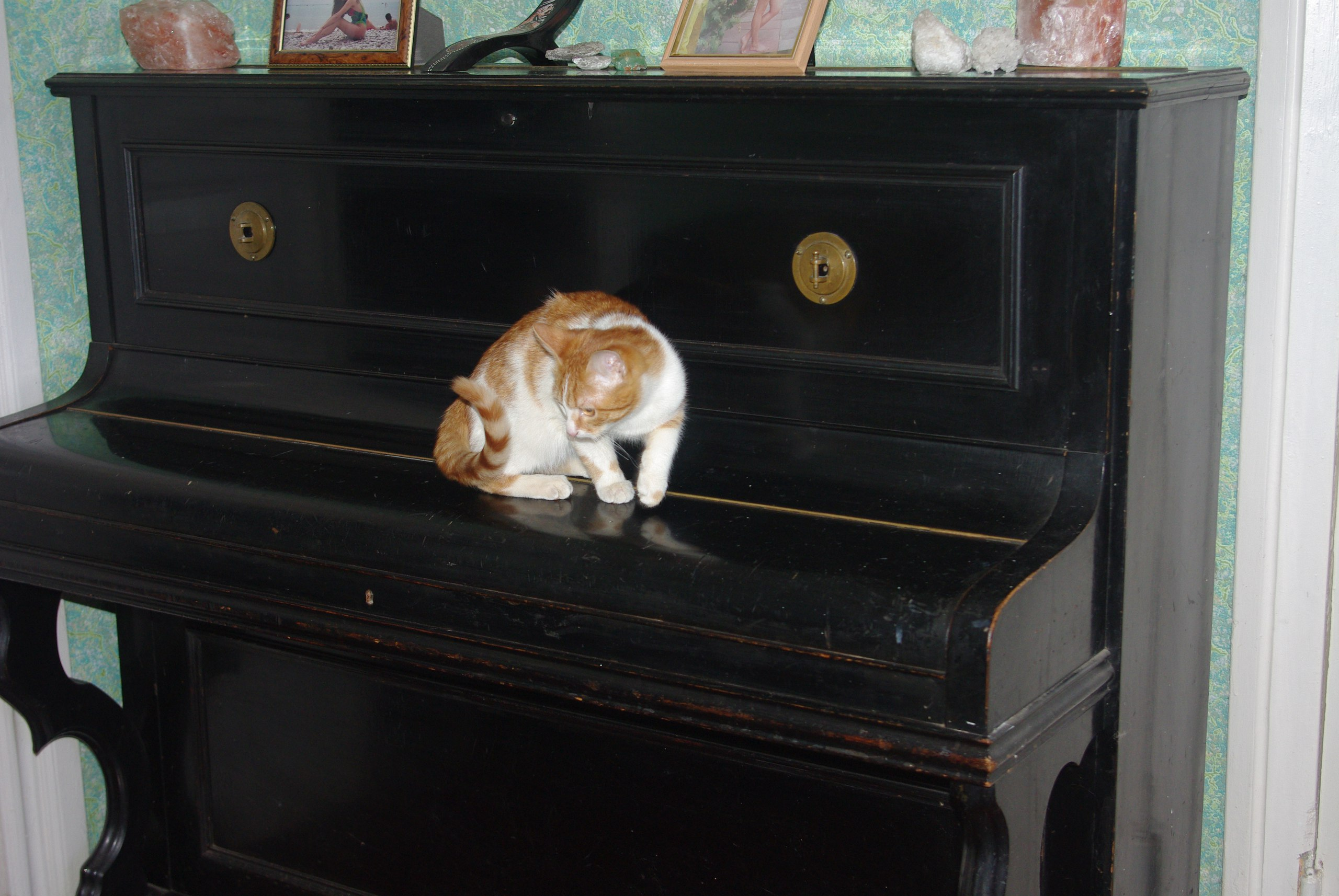 рыжий кот Зяма