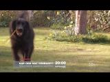 Тайная жизнь домашних животных 18 августа на РЕН ТВ