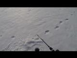 Ловля на ратлин зимой. Судак на LV-MAX 500 от Lucky Craft.